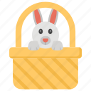 animal, pet, rabbit in basket, rabbit inside bucket, rodent in basket, wildlife