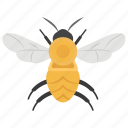 bee, bumble bee, drone, honey bee, insect, stinging insect icon