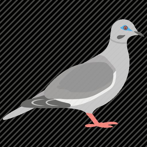 domestic animal, dove, flying bird, pet, pigeon icon