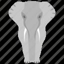 boar, elephant, mammal, mammoth, mastodon, tusker