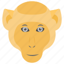anthropoid, chimpanzee, gorilla, monkey, rascal icon