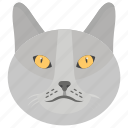 cat, domestic animal, feline animal, kitten, pet icon
