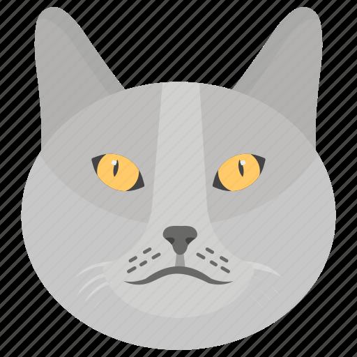 cat, domestic animal, feline animal, kitten, pet icon