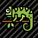 animal, chameleon, life, pet, wild icon