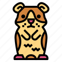 animal, guinea, pet, pig, rodent icon