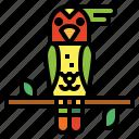 animal, bird, parrot, wildlife