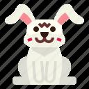 animal, pet, rabbit, wildlife