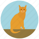 animal, cat, feline, kitten, kitty, pet, pets icon