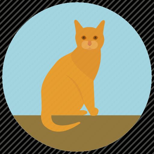 animal, cat, feline, kitten, kitty, pet, pets icon