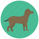 animal, dog, doggy, pet, pets, puppy icon