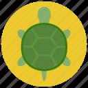 animal, pet, pets, turtle