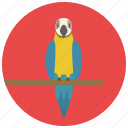 animal, bird, parrot, pet, pets icon