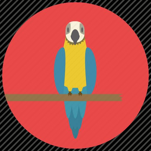 animal, bird, parrot, pet, pets icon