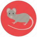 animal, mouse, pet, pets, rat, rodent icon