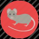 animal, pet, rodent, rat, pets, mouse