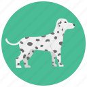 animal, dalmatian, dog, doggy, pet, pets, puppy icon