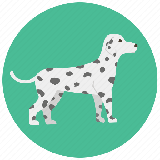 animal, dalmatian, dog, doggy, pet, pets, puppy icon