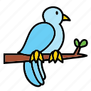 animal, bird, blue, peace, pet, pigeon icon