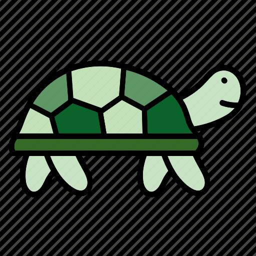 animal, color, pet, reptile, turtle, wildlife, zoo icon
