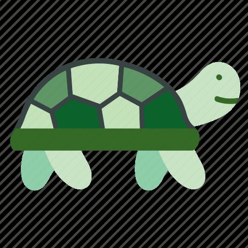 animal, pet, reptile, turtle, wildlife, zoo icon