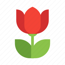 close, flower, photo, poppy, up icon