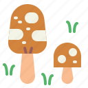 food, fungi, mushroom, mushrooms icon