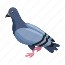 animal, bird, dove, nature, wild, zoo