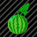 farm, fruit, harvest, plant, vegetable, vegetable garden, watermelon