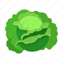 cabbage, farm, fruit, harvest, plant, vegetable, vegetable garden icon