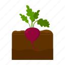beet, farm, fruit, harvest, plant, vegetable, vegetable garden icon