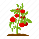 farm, fruit, harvest, plant, tomato, vegetable, vegetable garden icon