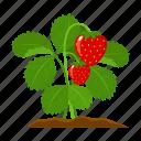 farm, fruit, harvest, plant, strawberry, vegetable, vegetable garden icon