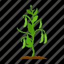 farm, harvest, peas, plant, vegetable, vegetable garden icon