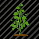 cucumber, farm, fruit, harvest, plant, vegetable, vegetable garden