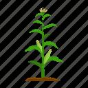 corn, farm, fruit, harvest, plant, vegetable, vegetable garden icon