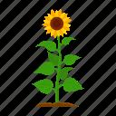 farm, fruit, harvest, plant, sunflower, vegetable, vegetable garden
