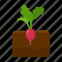 farm, fruit, harvest, plant, radish, vegetable, vegetable garden icon