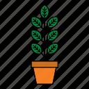 decor, decoration, flora, houseplant, nature, plant, pot icon