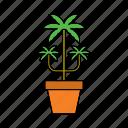 decor, flora, home, houseplant, nature, palm tree, plant
