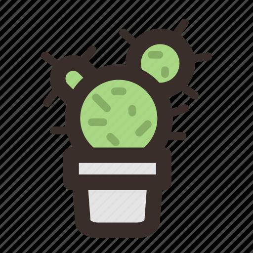 cactus, flora, interior, plant, pot, thorns icon