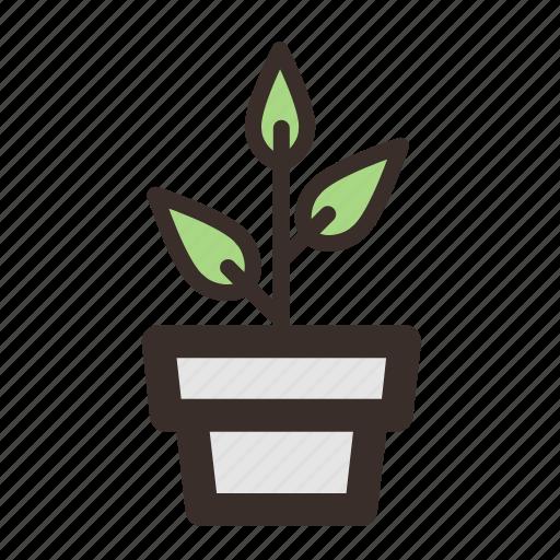 decoration, flowerpot, garden, interior, leaf, plant icon
