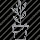 flower, leaf, nature, plant, pot
