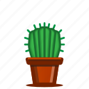 cacti, cactus, plants, potted plant, succulent, trees icon