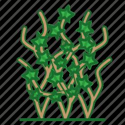 climbing plant, ivy, plants, succulent, trees, vine icon