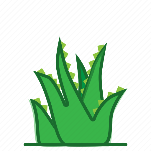 aloe, aloe vera, plants, succulent, trees icon