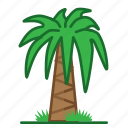 palm, plants, succulent, trees icon