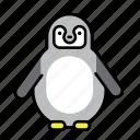 animal, bird, penguin, polar, polar life, south pole