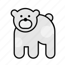 animal, animals, bear, polar, polar bear, the north, zoo