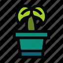 cactus, flower, leaf, plant, pot, trees