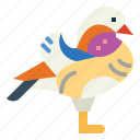 duck, wildlife, poultry, animal, mandarin